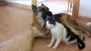 Dog Licking Pussy.