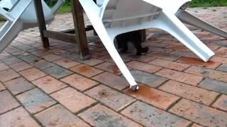 Le jeu cruel du chat et de la souris