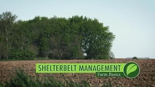 Farm Basics #999 Shelterbelts (Air Date 5-28-17)