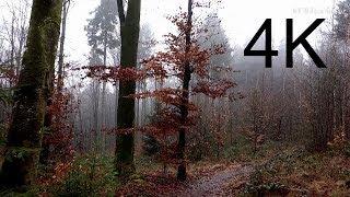 4K Video, Ultra HD: DECEMBER FOREST WALK (in the fog)