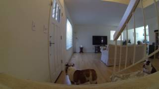 Our new Furbo Pet Camera in action!