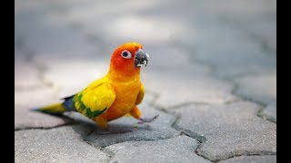 Funny & Tricks of Parrot and Bird Videos 2017