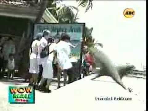 wow mali - shark viewing