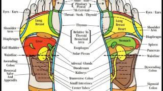 Foot Reflexology Map for Beginners (16)