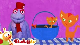 Dog and Cat in a Funny Animals Video | BabyTV
