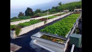 Sostenibilidad en los Cultivos de Acuaponía - TvAgro por Juan Gonzalo Angel