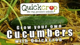 Grow Your Own Cucumbers With Quickcrop