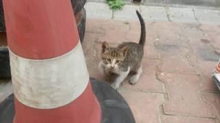 Minik bir yavru kedi için sokakta olup hayatta kalmak hiç kolay değil