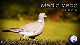 VÍDEO: Caza. Media Veda 13-08-17
