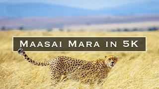 Maasai Mara in 5K