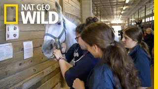 Hold Your Horse's Tongue | Vet School