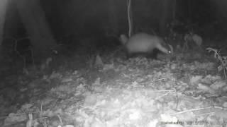 16MP HD 1080pP 30FPS Bushwhacker Hunting Trail Camera- Big eye D3 VIDEOS