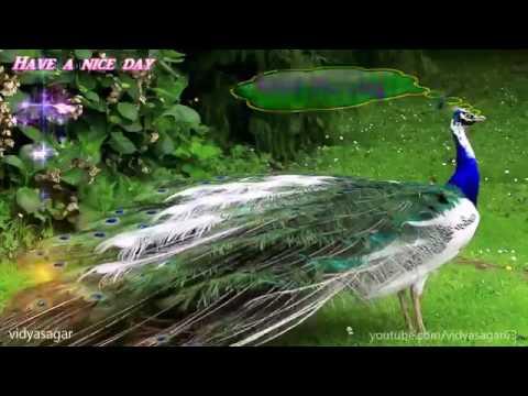 Xxx Mp4 Indean Pikok Dance Part 2 3gp Sex