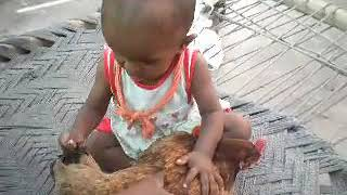 funy video baby and hens mp4