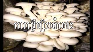 ការធ្វើផ្សិតអំបោះ - Mashroom