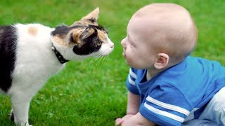 Cats and Dogs Meeting Babies for the First Time Compilation (2017)