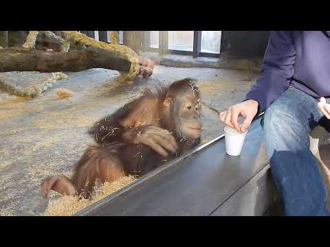 Monkey Sees A Magic Trick