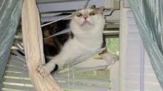 LAUGH at these HILARIOUS ANIMALS! Stunning CAT, DOG and other ANIMAL COMPILATION
