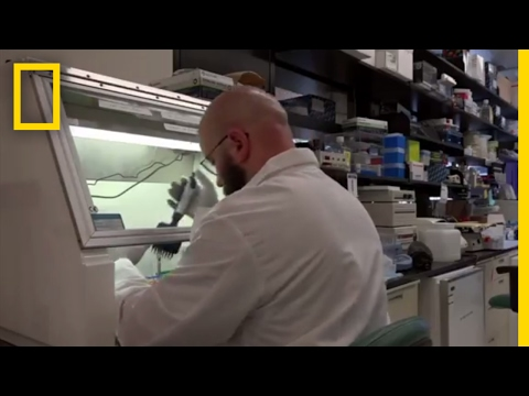 This Is the Future of Medicine | Origins: The Journey of Humankind