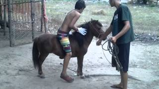 Como levar coice de um ponei !
