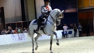 Andalusian Dancing Horse at DIAHS 2014