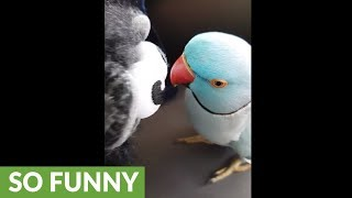 Parrot has full blown conversation with new toy