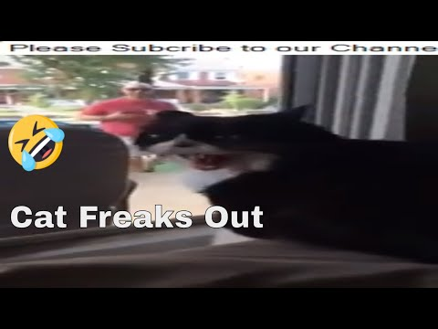 Xxx Mp4 Cat Freaks Out When He Sees His Owner Brings Back A New Pet Dog 3gp Sex