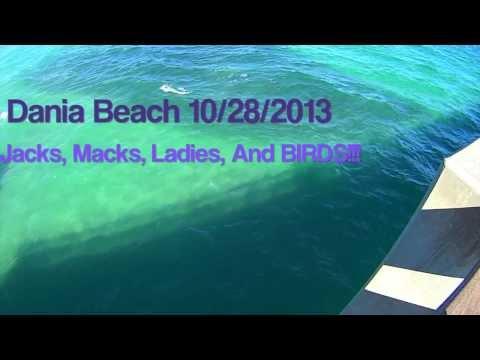 Dania Fishing for Jacks Mackerel ladies and Birds