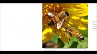 Project beekeeping, English Dot level 8 Sena virtaul