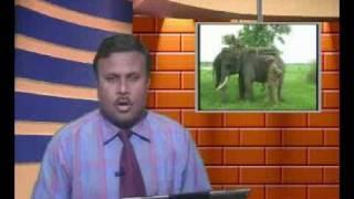 jcc news jagiroad morigaon assam.