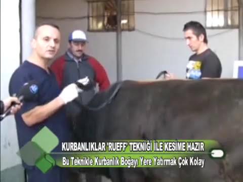 KURBANLIKLAR RUEF TEKNİĞİ İLE KESİME HAZIR 02.11.2011.wmv