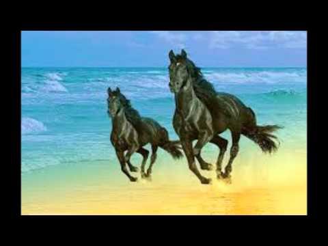Xxx Mp4 DJ Stallion Oh Sweet Horsecum 3gp Sex