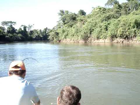 nova mutum rio arinos traira de 15 kgs