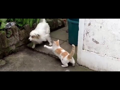 Cat vs Dog Fight Funny Video -  who won, you decide?