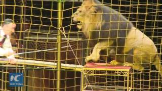 Dancing with lions: Circus show by Ukrainian father and son