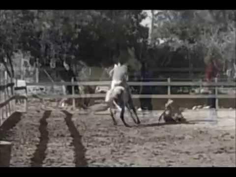 Montando un caballo salvaje