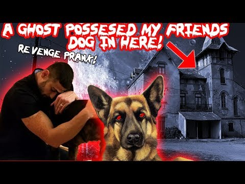 A GHOST POSSESSED MY FRIENDS DOG IN TOMS HAUNTED HOUSE REVENGE PRANK MOE SARGI