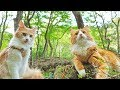 Download Video Download Taking my cats for a walk 3GP MP4 FLV