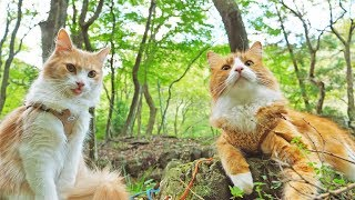 Taking my cats for a walk