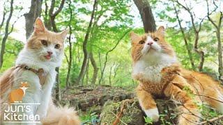 Membawa Kucingku Jalan-Jalan