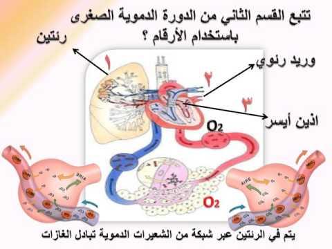 Xxx Mp4 الدورة الدموية الصغرى 3gp Sex
