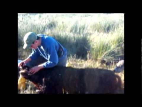 caza de jabali con jauria en monte hermoso