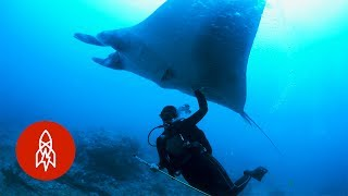 Swim With Manta Rays, the Ocean's Peaceful Giants