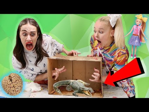 Xxx Mp4 WHAT S IN THE BOX CHALLENGE W MIRANDA SINGS Live Animals 3gp Sex