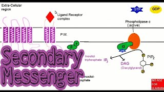 Secondary messengers in Hindi | cAMP | IP3 | DAG