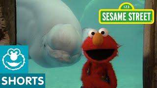 Sesame Street: Elmo and Whale: Love