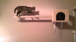 Lucy Tha Cat! Playground Setup
