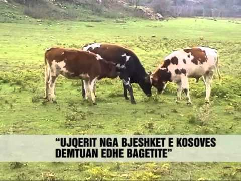 Shfaqen ujqerit ne Kukës Vizion Plus News Lajme