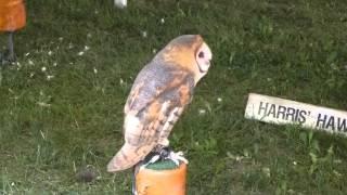 At The NYS Fair: Hawk Creek Wildlife Center - Barn Owl