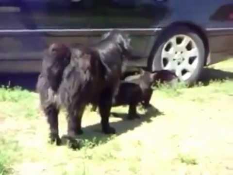 Perros detienen pelea de gatos
